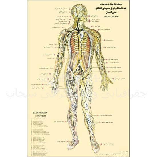 مجموعه-۹-پوستر-تشریحی-بدن-انسان (۲)