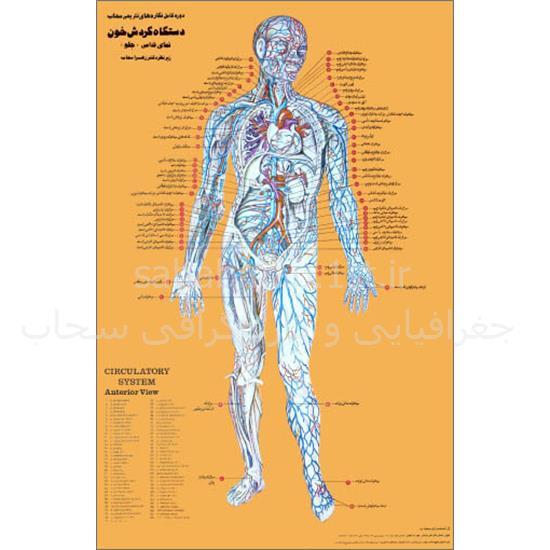 مجموعه-۹-پوستر-تشریحی-بدن-انسان (۳)